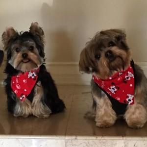 Buster & Bentley